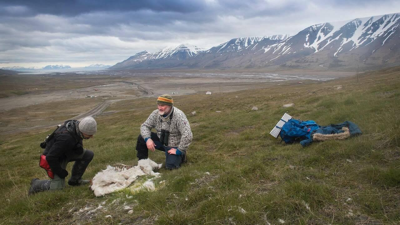 Arctique: 200 rennes retrouvés morts de faim, le changement climatique pointé du doigt