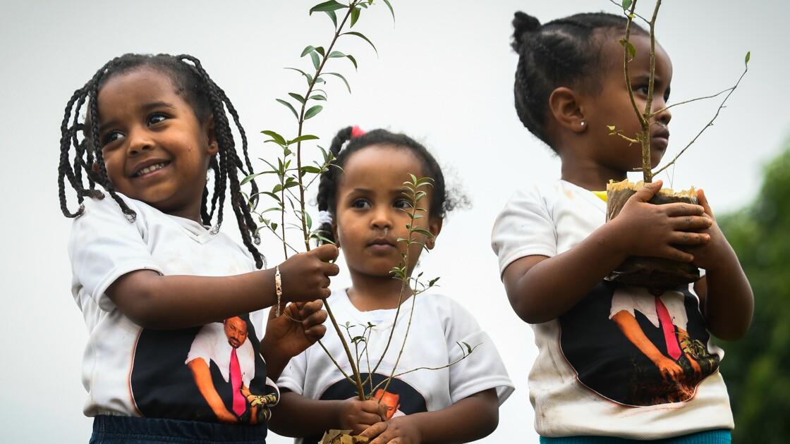 L'Ethiopie, à l'heure de l'écologie, veut planter 4 milliards d'arbres