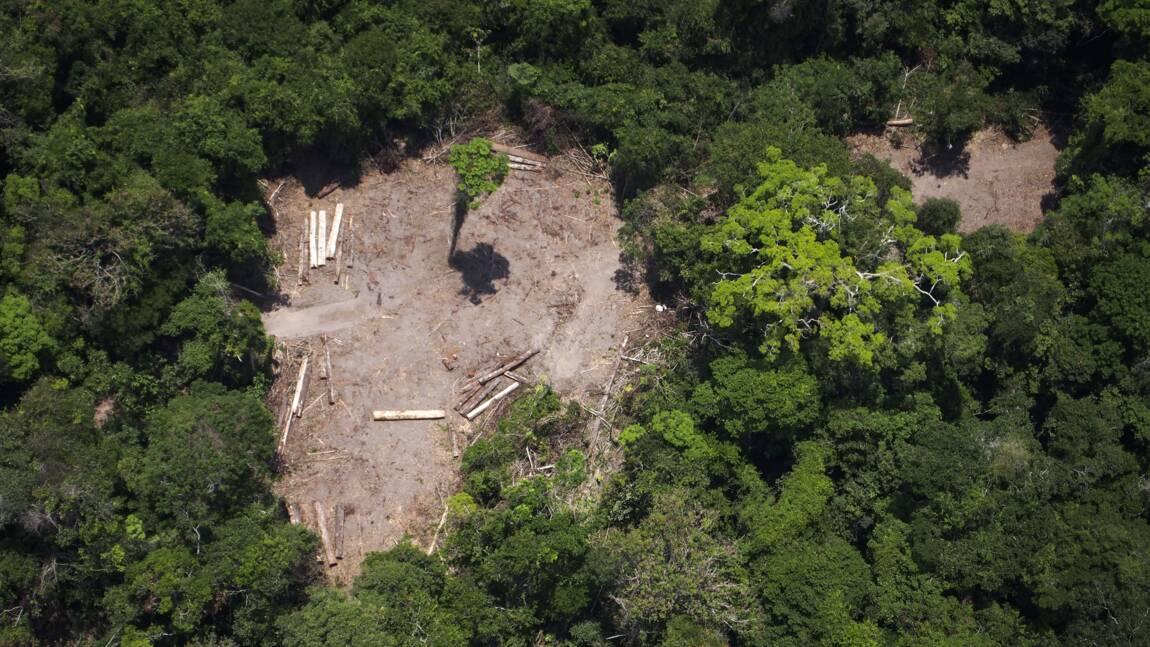 Le Brésil, géant agricole pas vraiment vert