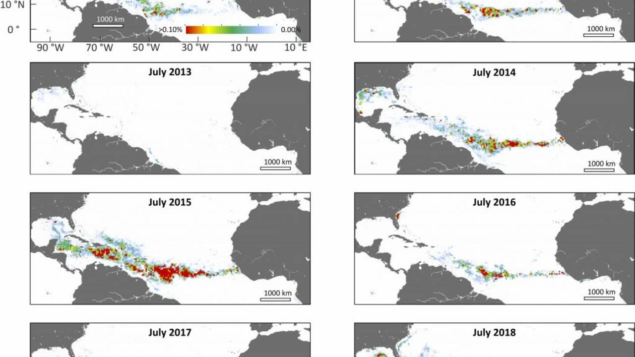 L'origine des invasions d'algues sargasses sur les plages des Caraïbes enfin élucidée ?