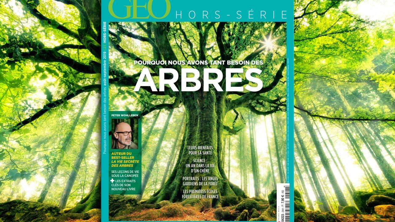 Vivre dans une cabane perchée dans les arbres, le rêve devenu réalité d'un Français