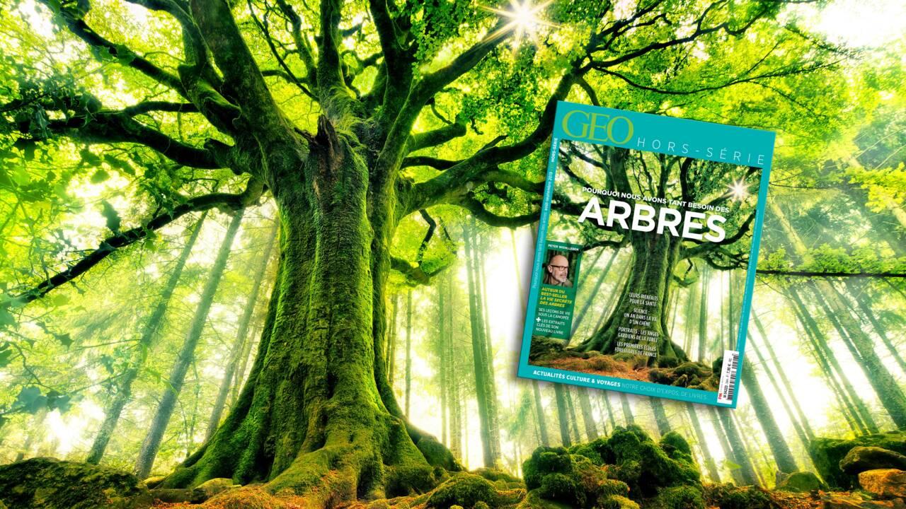 Pourquoi nous avons tant besoin des arbres : le nouveau hors-série GEO