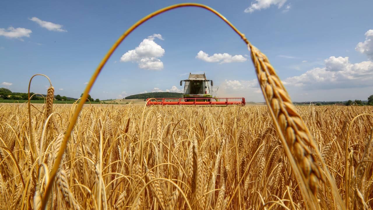 La sécurité alimentaire au défi de l'urgence climatique : le rapport du Giec adopté