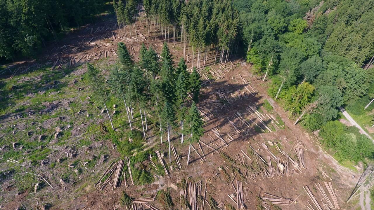 Face au réchauffement, les pistes des professionnels pour protéger la forêt européenne