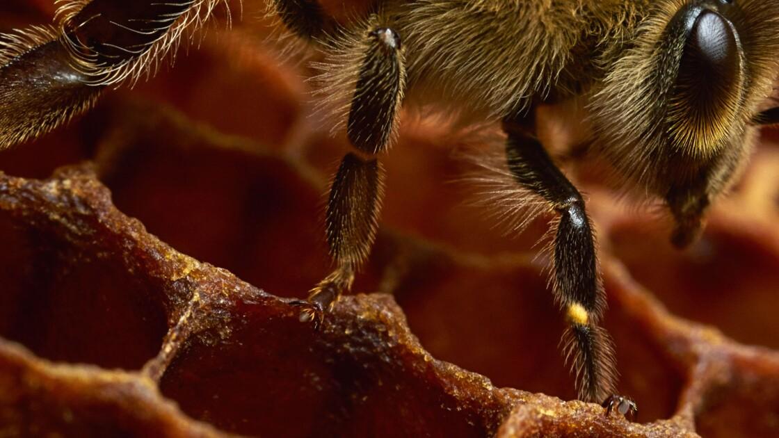 Une exposition au plus près des abeilles à découvrir au Havre