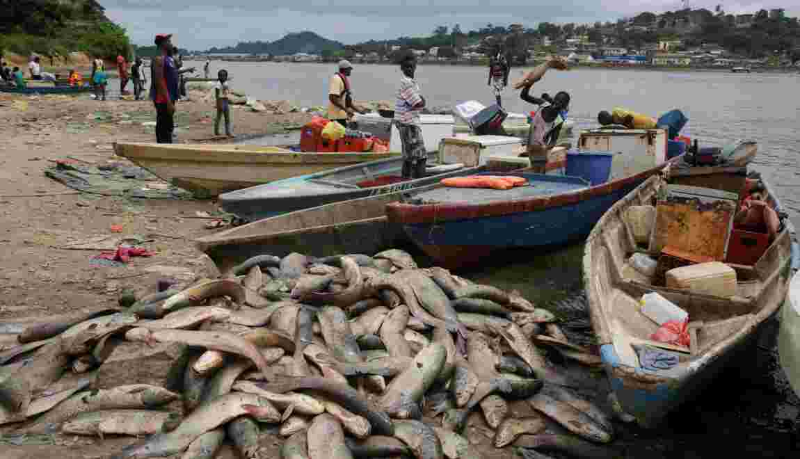 Gabon: la fin des carpes dans la ville du Dr Schweitzer