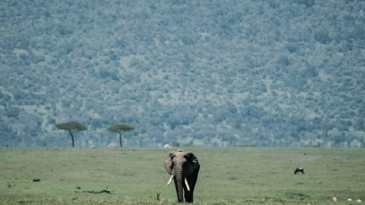 Les experts de la CITES au chevet des espèces menacées