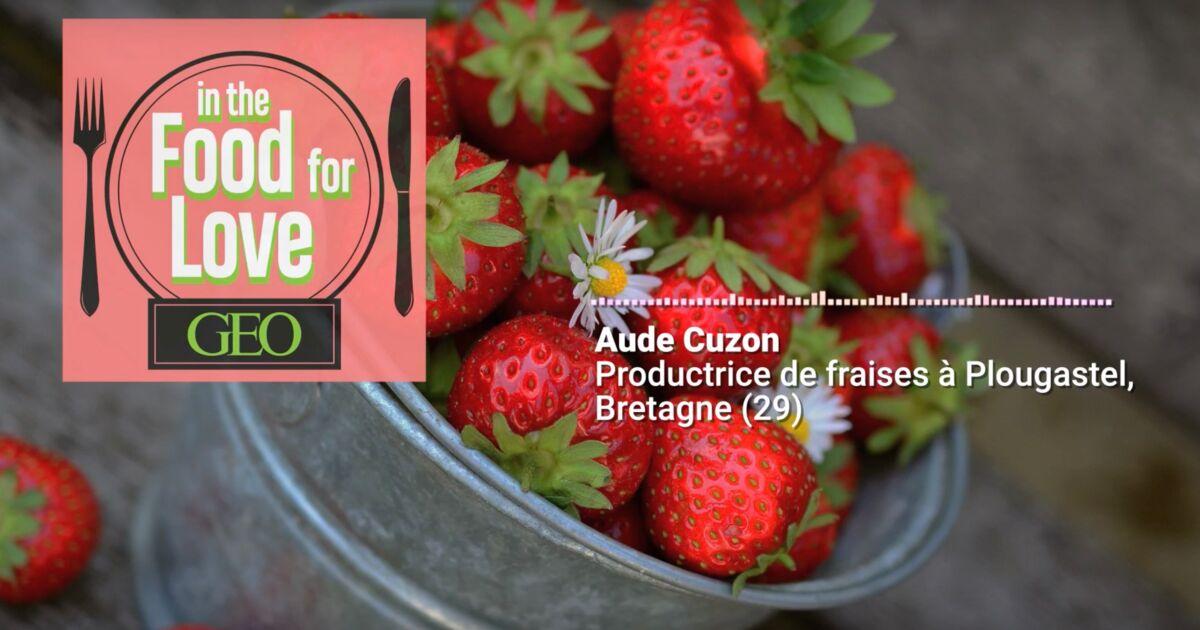 Podcast audio : les fraises, le trésor de Plougastel