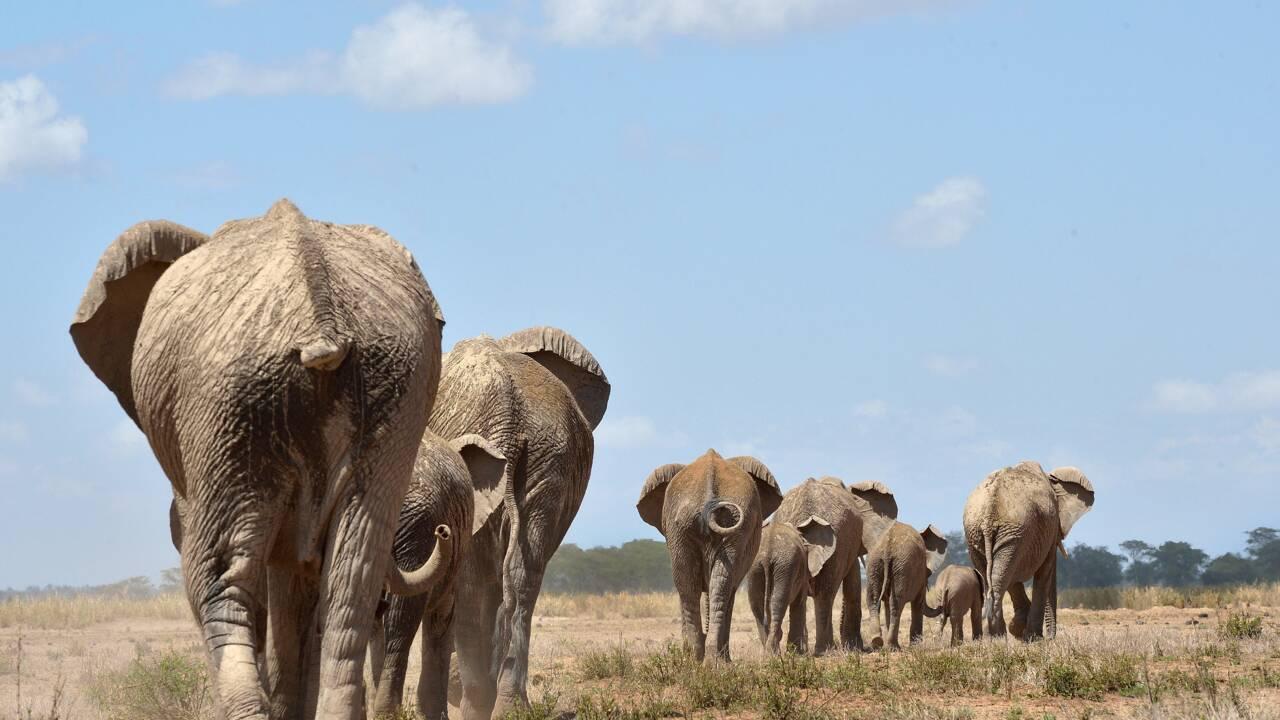 Espèces menacées: des députés européens demandent l'interdiction de la chasse aux trophées
