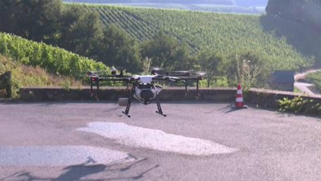 Quand les drones bourdonnent dans les vignes du Luxembourg