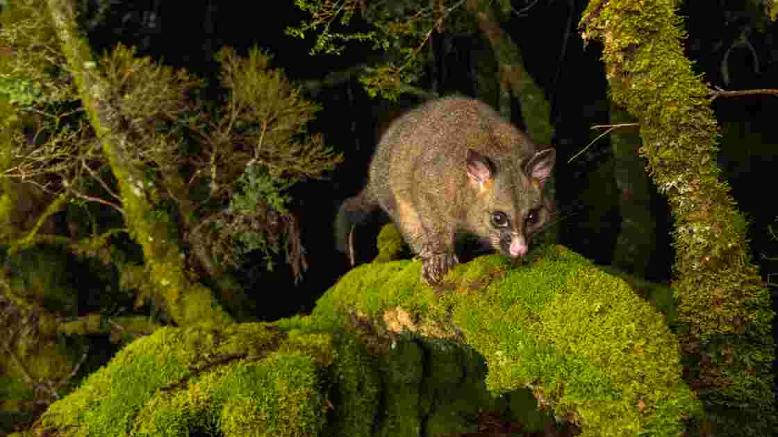 Les plus belles photos de nature de l'Australie à la Nouvelle-Zélande récompensées en 2019