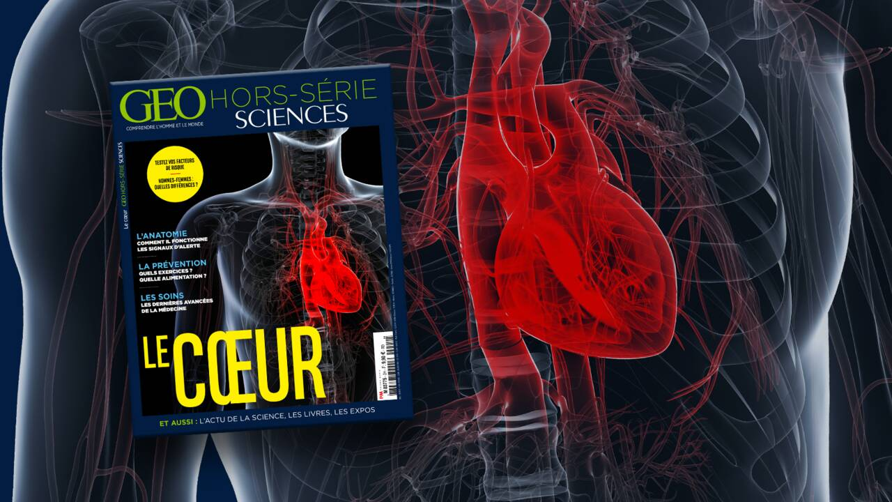 Petits et grands secrets du cœur dans le nouveau hors-série GEO Sciences