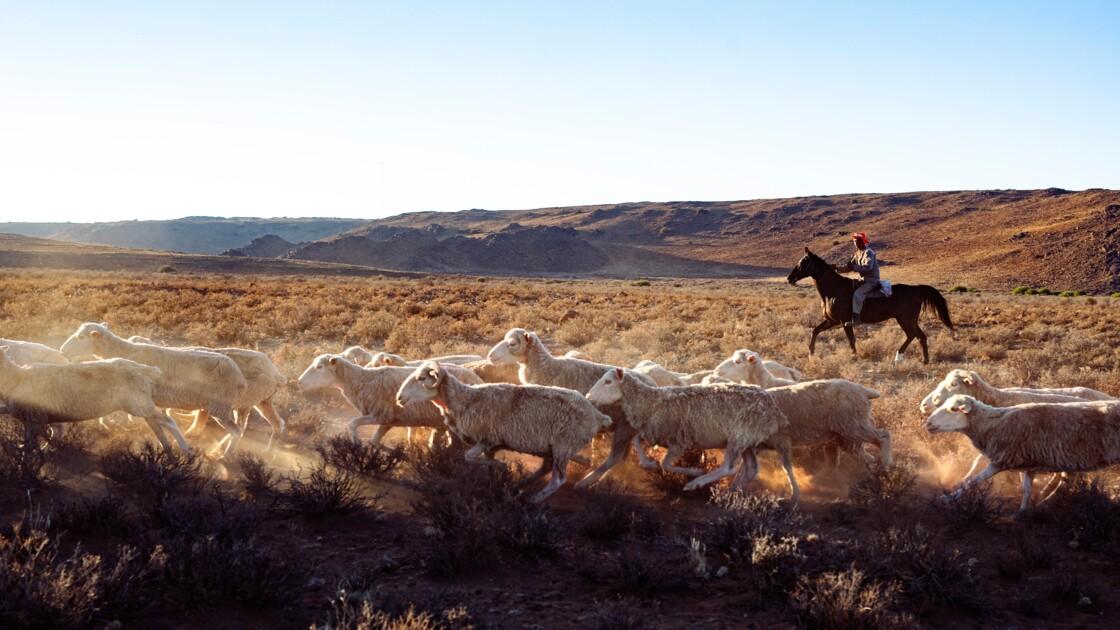 Afrique du Sud : quand les fermiers du Karroo tentent de vaincre la sécheresse