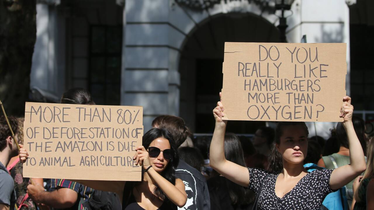 """Amazonie: manifestation à Londres pour sauver """"les poumons en feu"""" de la planète"""