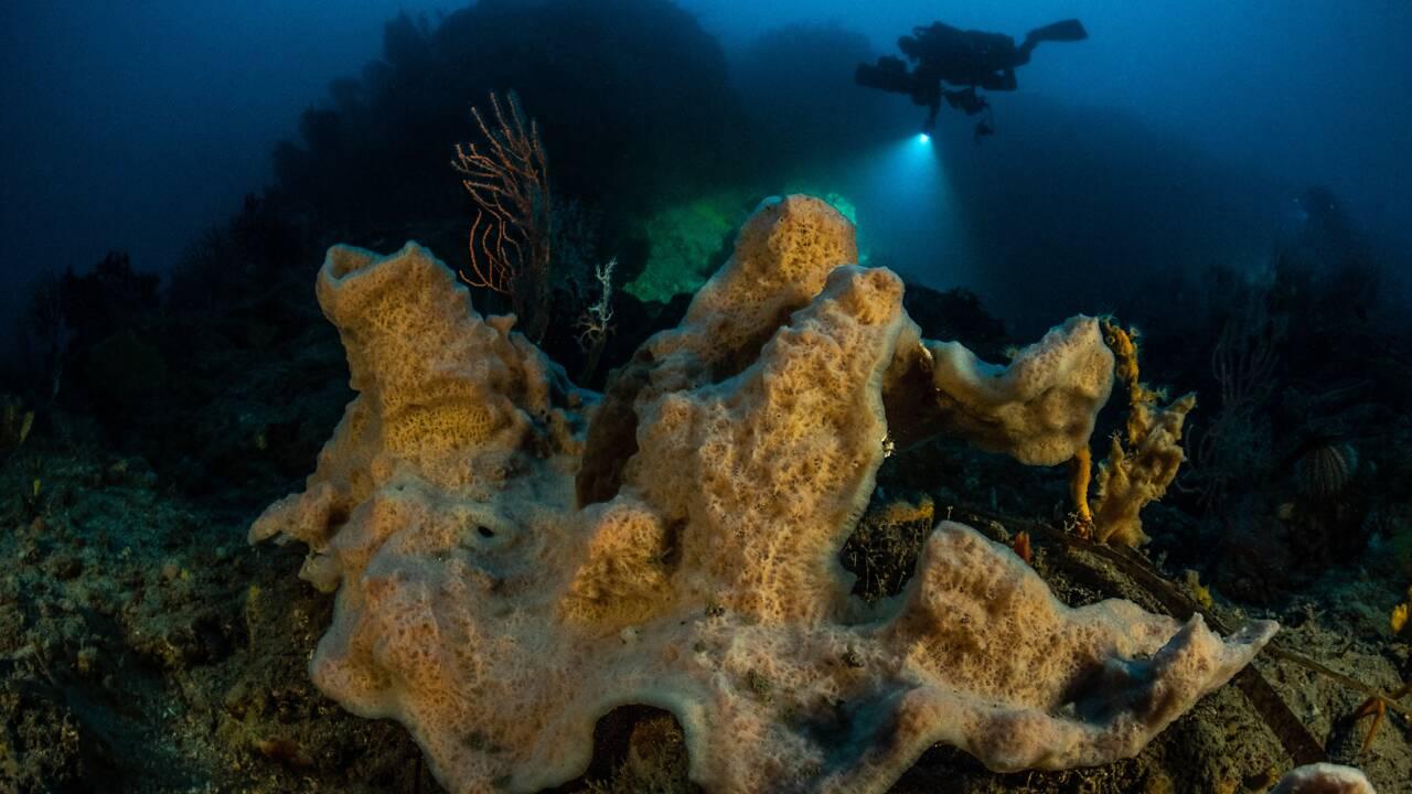 """Laurent Ballesta : """"Je veux montrer qu'il existe encore une Méditerranée belle, préservée et surprenante"""""""