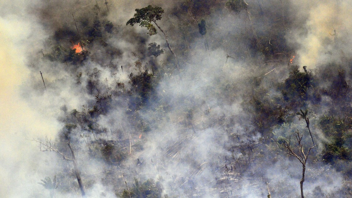 La régénération de la forêt en Amazonie, un processus lent et difficile