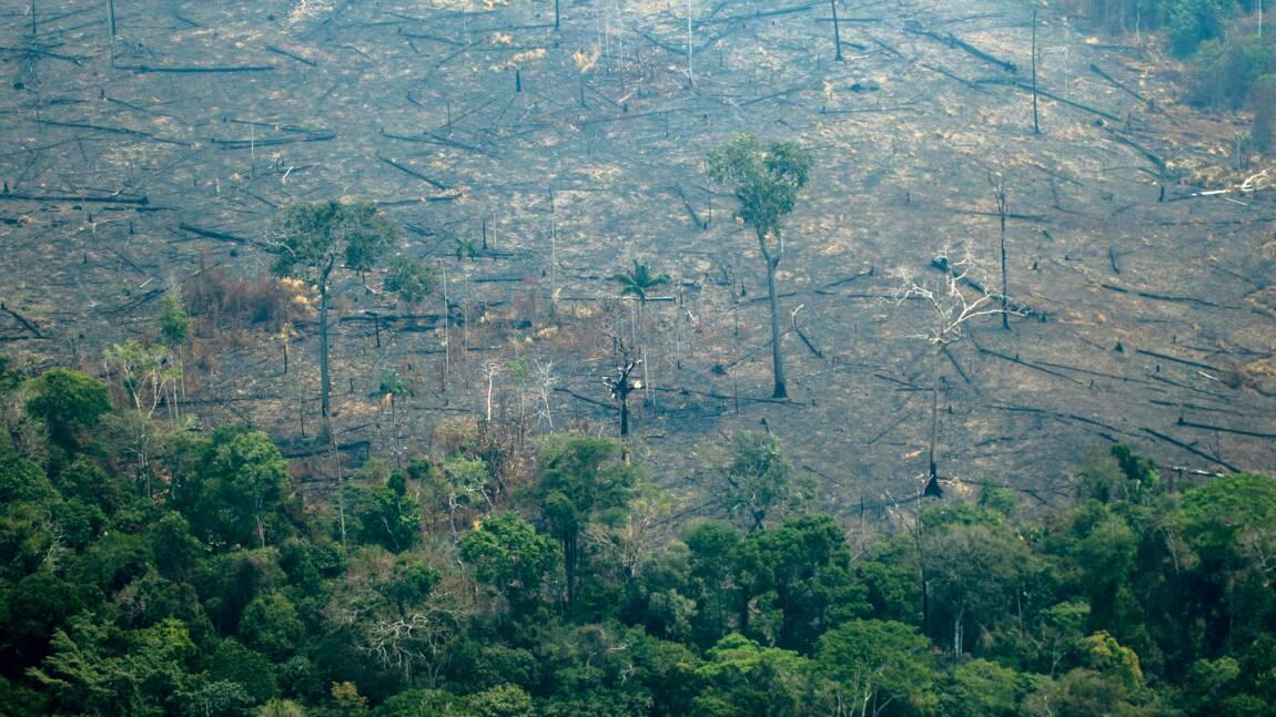 Amazonie: le G7 mobilise des moyens contre les feux