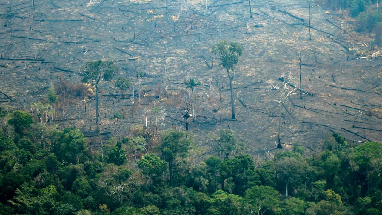 Londres promet 10 millions de livres pour l'Amazonie