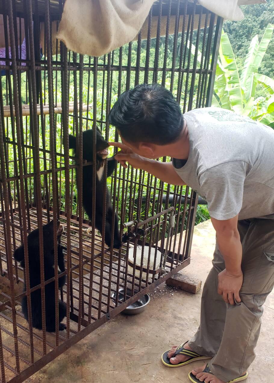 Laos: cinq ours noirs d'Asie, espèce en danger, sauvés en une journée