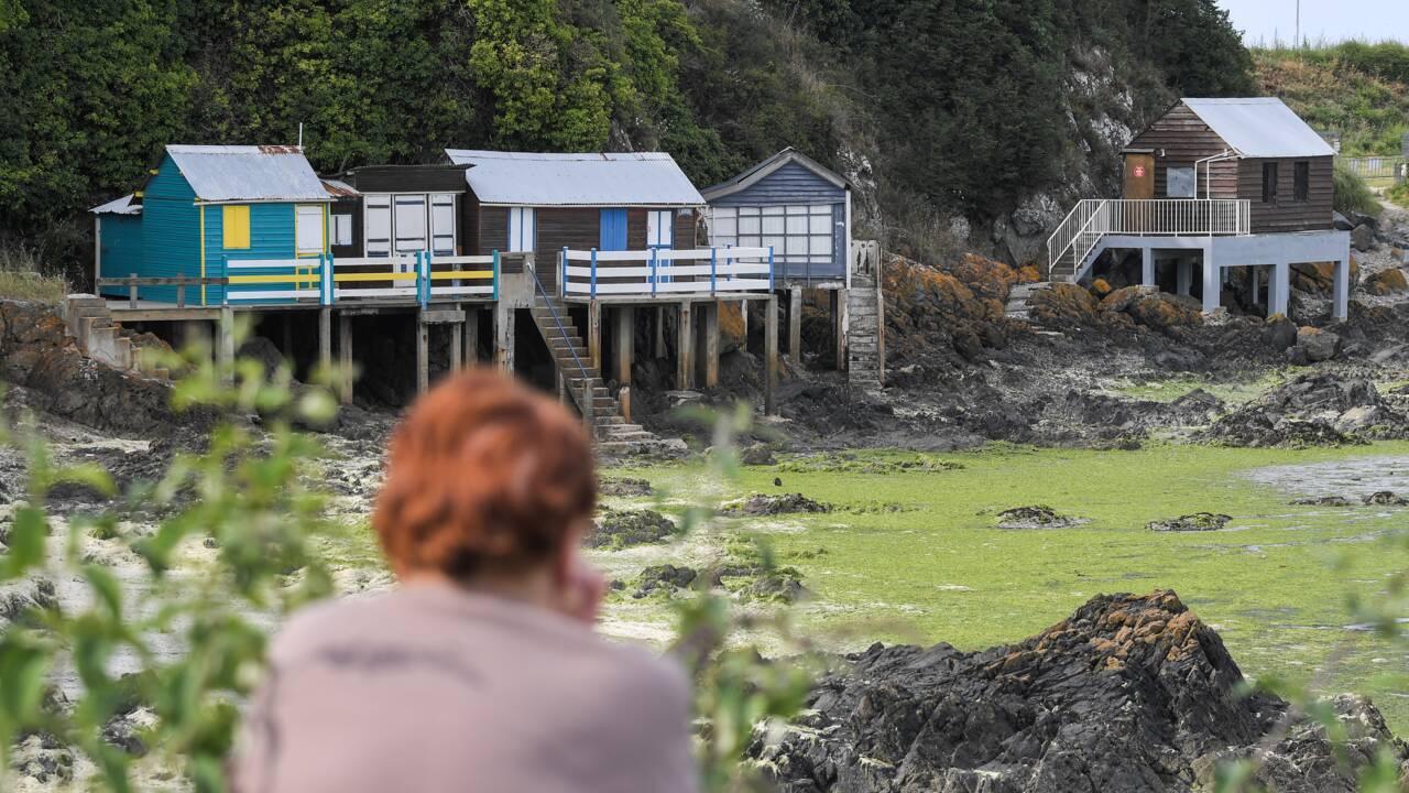 Algues vertes: échouages en baisse mais toujours importants en Bretagne