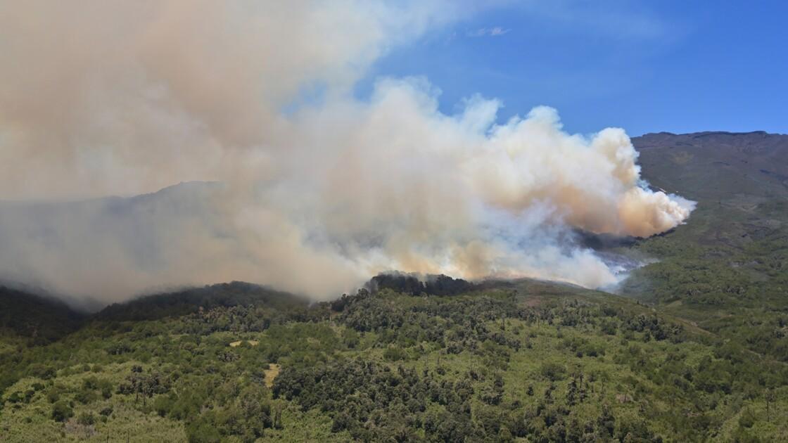 Forêts : l'Afrique brûle aussi, mais pas comme l'Amazonie