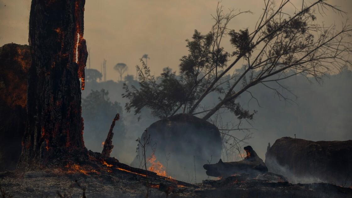 Brasilia promet de réduire la déforestation de l'Amazonie