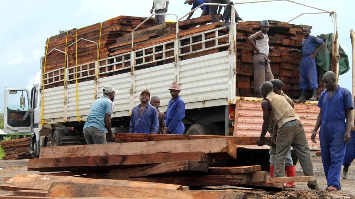 RDC: inquiétude autour du pillage d'un bois menacé d'extinction