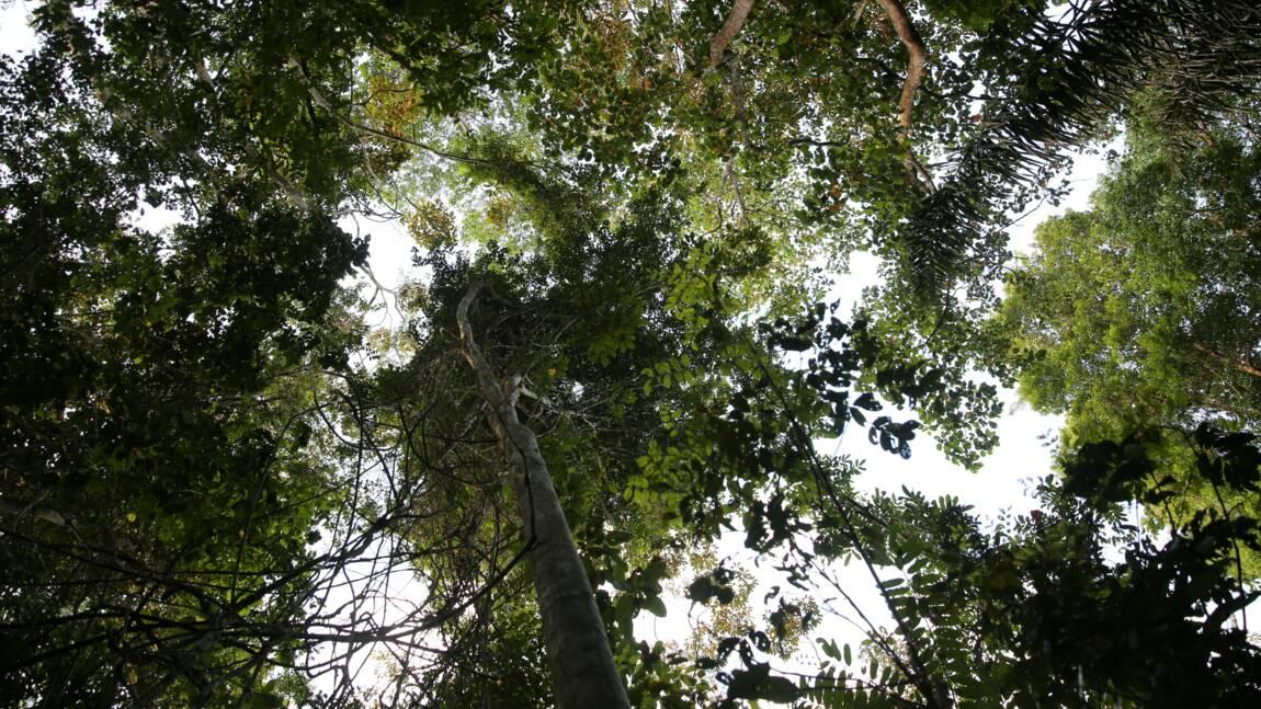 Déforestation en Amazonie: la Guyane surtout menacée par l'orpaillage