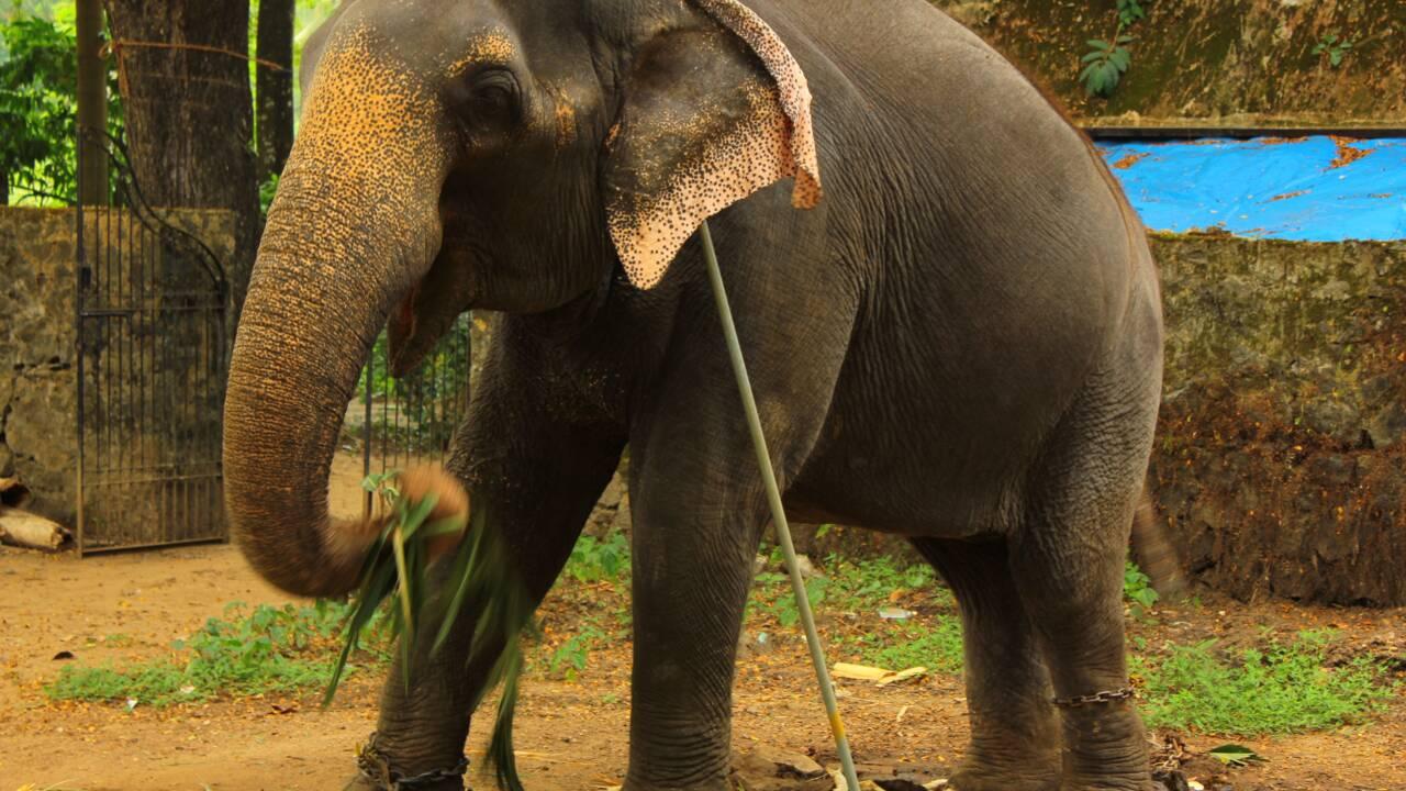 Tourisme animalier et dérives : ce qu'il faut savoir avant de partir à la rencontre des animaux
