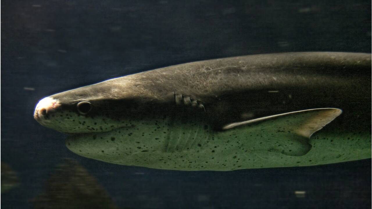 Les grands requins blancs ont disparu d'une célèbre baie au large du Cap