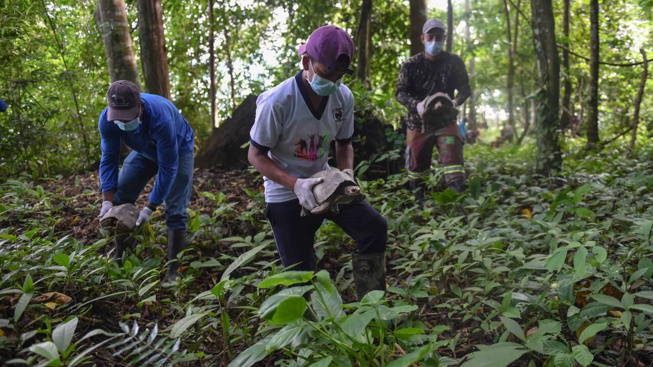 Colombie: les animaux sauvages domestiqués, menace pour la faune