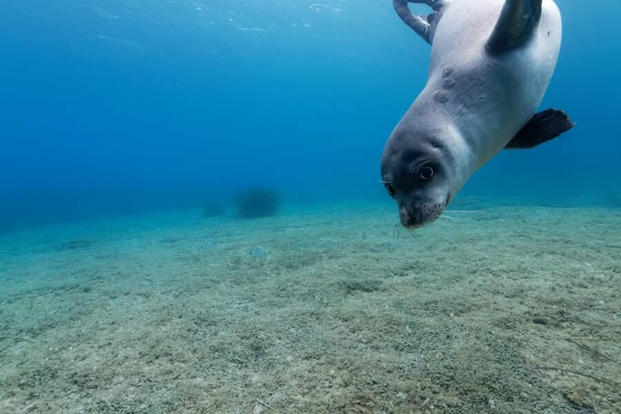Des plongeons jusqu'à 100 mètres de profondeur