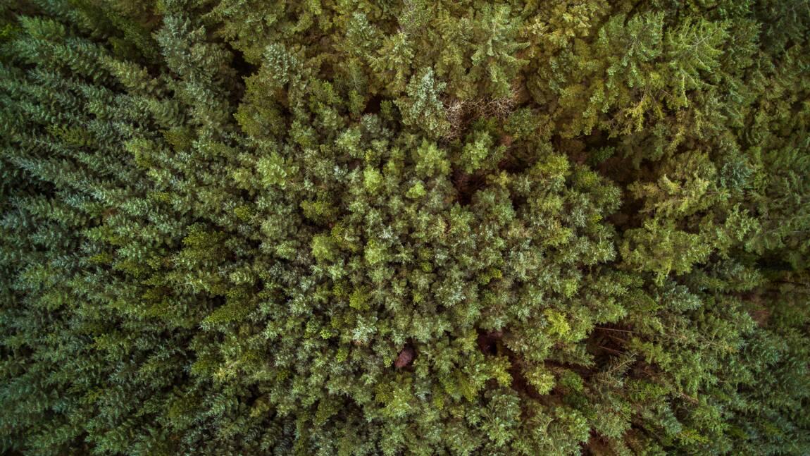 L'Irlande prévoit de planter 440 millions d'arbres d'ici 2040