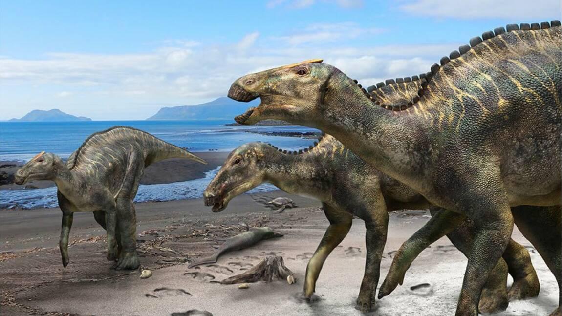 Un squelette de dinosaure à bec de canard découvert au Japon