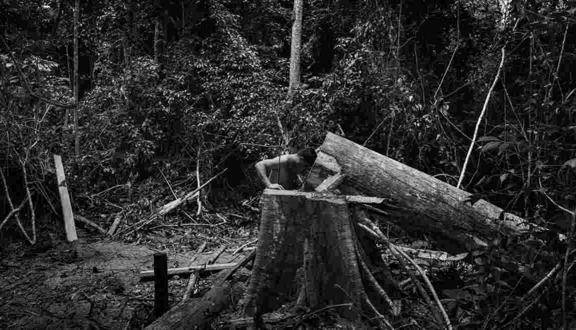 Et le 10e Prix Carmignac du photojournalisme consacré à l'Amazonie est attribué à...