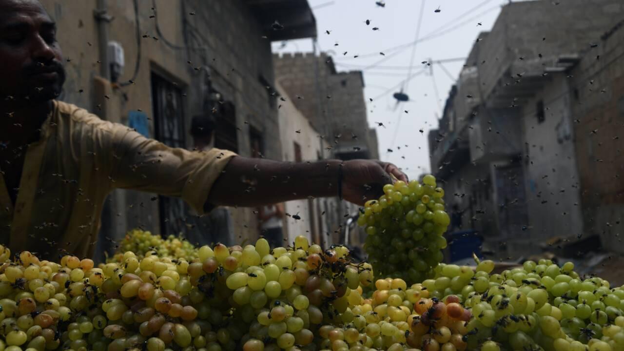 Pakistan: Karachi en proie à des nuées record de mouches suite à la mousson