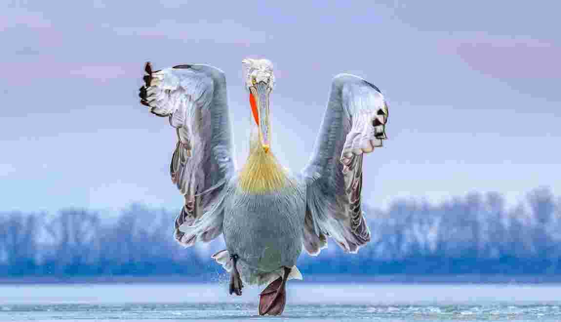 Les magnifiques photos d'oiseaux récompensées par le Bird Photographer of the Year