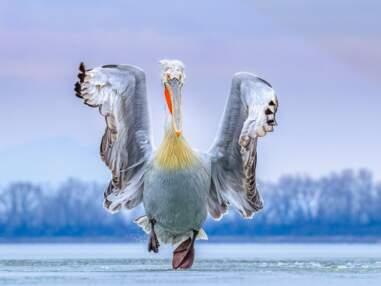 Bird Photographer of the Year : les magnifiques photos d'oiseaux récompensées en 2019