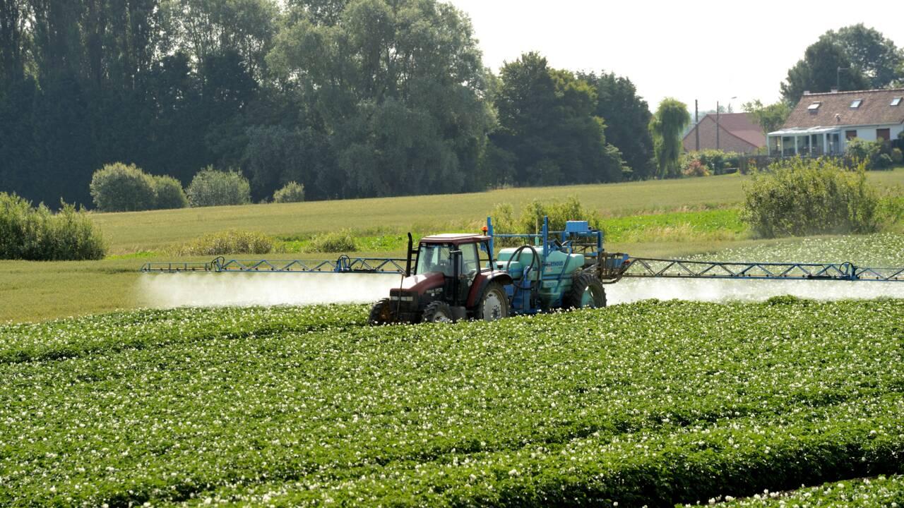 Pesticides: le gouvernement ouvre la consultation sur les zones d'épandage