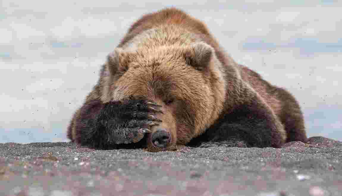 Les photos finalistes des animaux les plus drôles des Comedy Wildlife Photography Awards