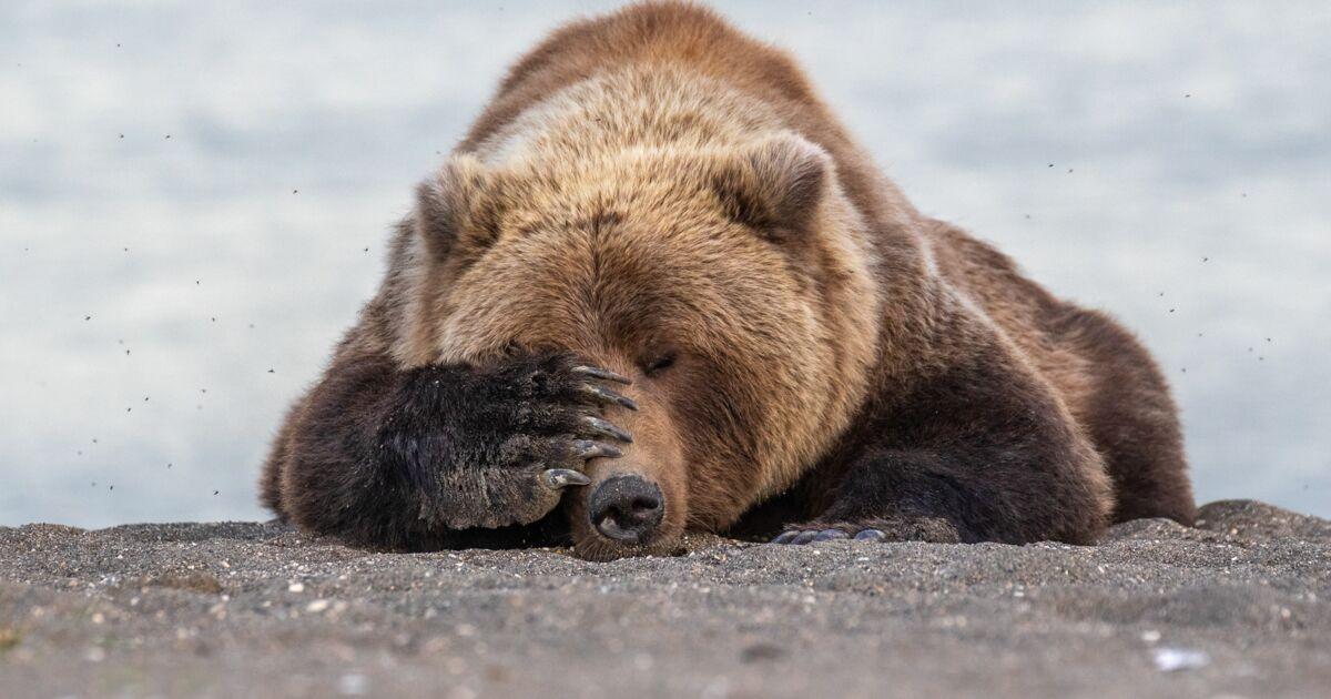 Les photos d'animaux les plus drôles finalistes des Comedy Wildlife Photography Awards