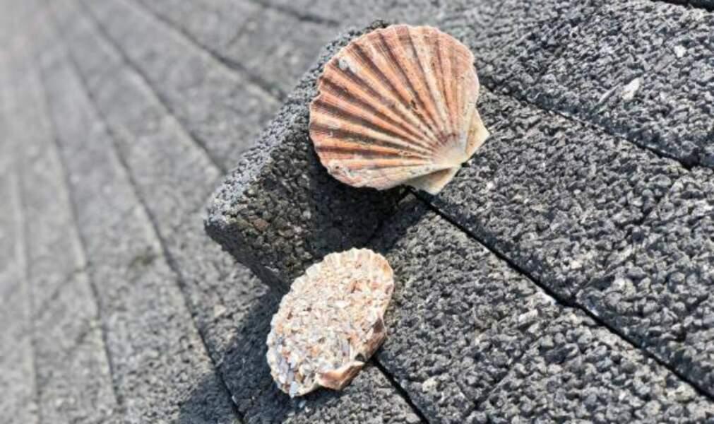 A Nice, des pavés à base de coquilles Saint-Jacques pour faire baisser les températures