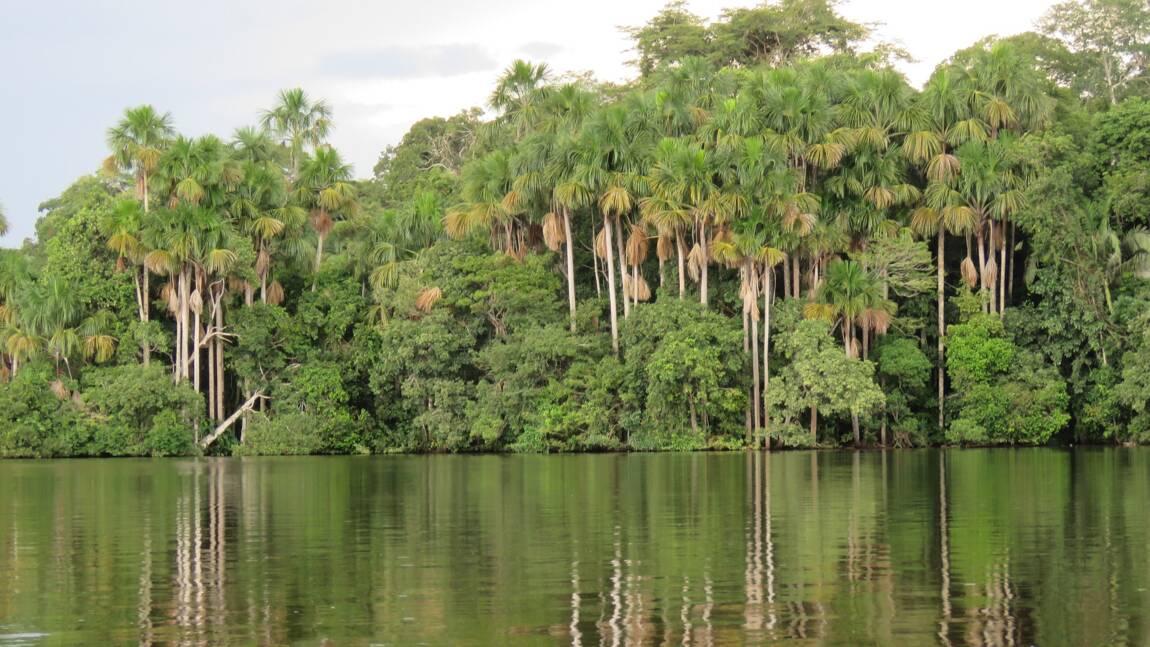 Archéologie : l'Amazonie était peuplée bien avant l'arrivée des premiers colons