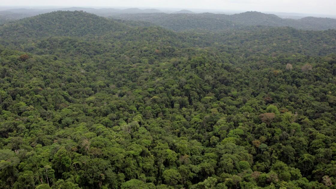 Forêt amazonienne: une délégation de Guyane avec Macron à l'ONU