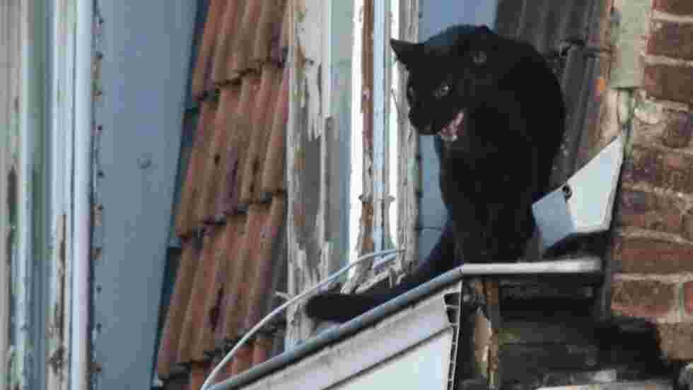 Une panthère noire capturée sur un toit à Armentières