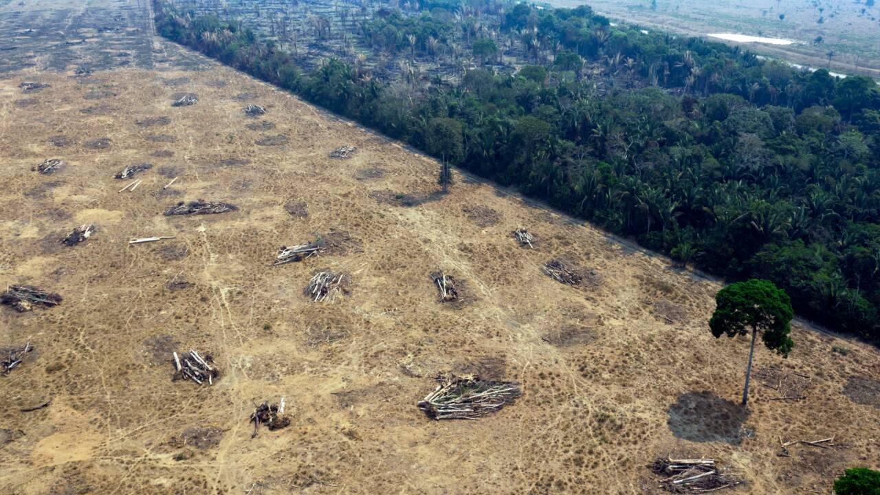 Déforestation de l'Amazonie: des supermarchés britanniques menaçent de boycotter le Brésil