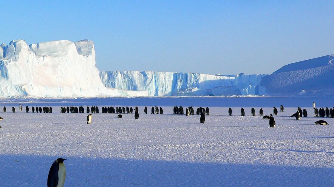 """Malek Boukerchi : """"Le jour où j'ai couru 142 kilomètres en Antarctique"""""""