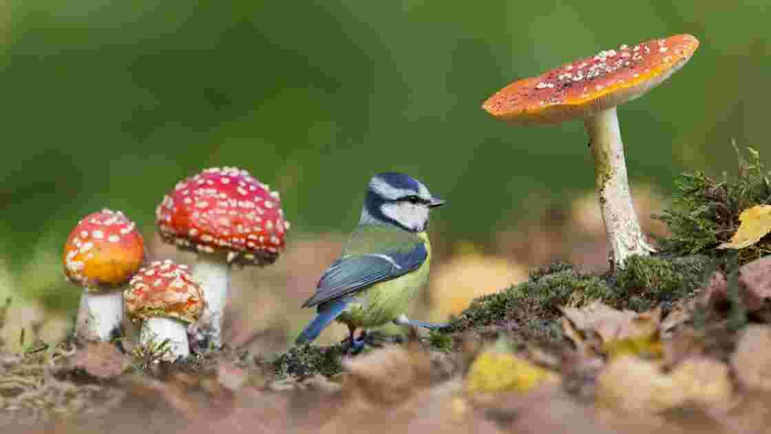Royaume-Uni : les plus belles photos de faune sauvage et de nature récompensées en 2019