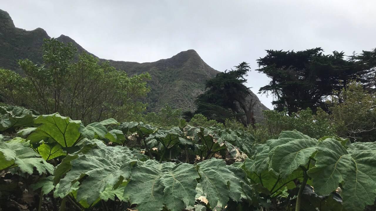 Au Chili, la recherche d'un trésor de pirates sur l'île Robinson Crusoé crée la polémique