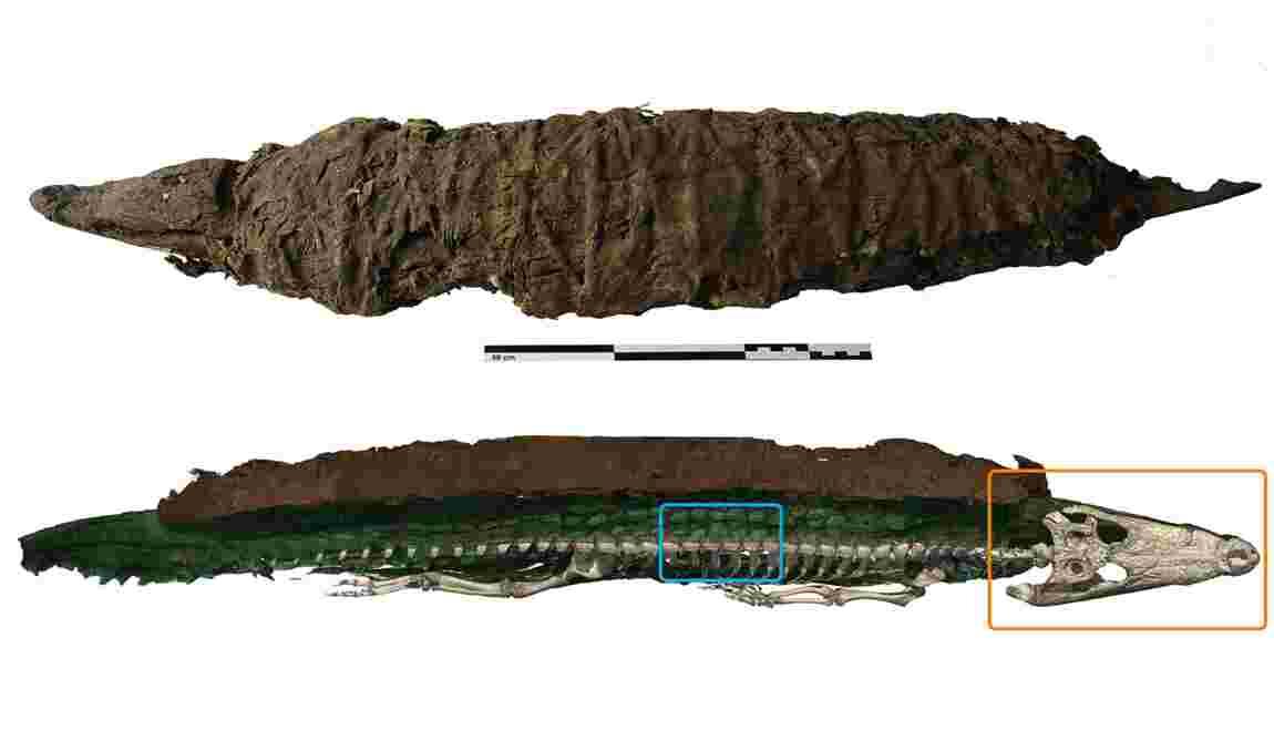 Il y a 2000 ans, les Egyptiens chassaient des crocodiles sauvages pour en faire des momies